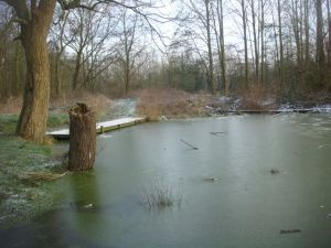 Frozen pond