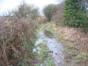 Rather wet path on the way to the caches near Baschurch