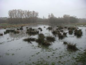 The flooded cache field in Stafford