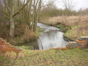 Stream in Pendeford Woods
