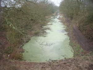 View down the ex-canal, now a nature reserve