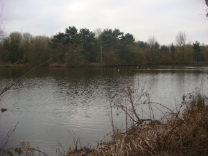 Looking out over the Ice Pool at Sandwell Valley Country Park