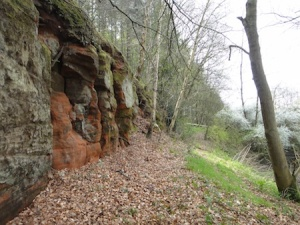 Sandstone cliff in the woods