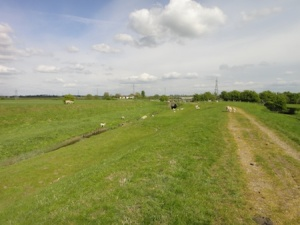 Views from the Ribble embankment on the R.A.T. series walk