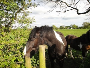 The friendly horses. One of them almost has it's chin on the cache hiding place