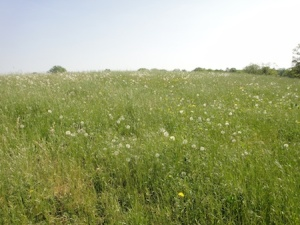 Lovely wild meadow on the Perry Bridges caches