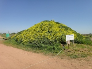 A small yellow hill - rapeseed is in full bloom this time of year