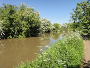 A peaceful stretch of the Coventry Canal