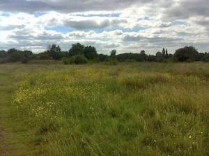 Wild meadows near the Big Kids Challenge bonus cache