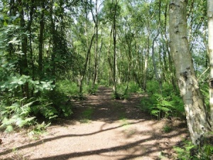 We love caching in woodland like this - so tranquil
