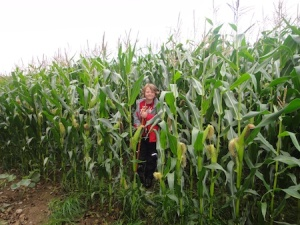 About to enter the field of corn on the way to the next cache
