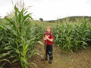 About to cross a field of very high corn on our walk