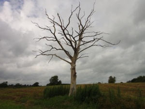 A lightning tree we passed on the way round the series