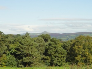 Shutlingsloe in the distance